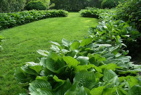 Grass perennials