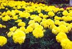 Color mood of a garden
