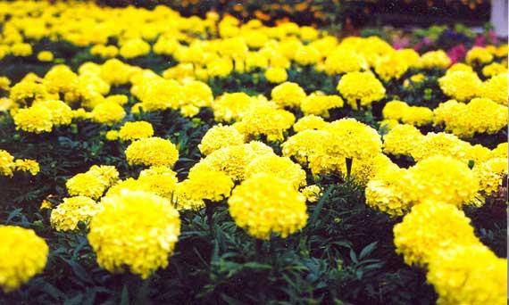 Color Mood Of A Garden ...