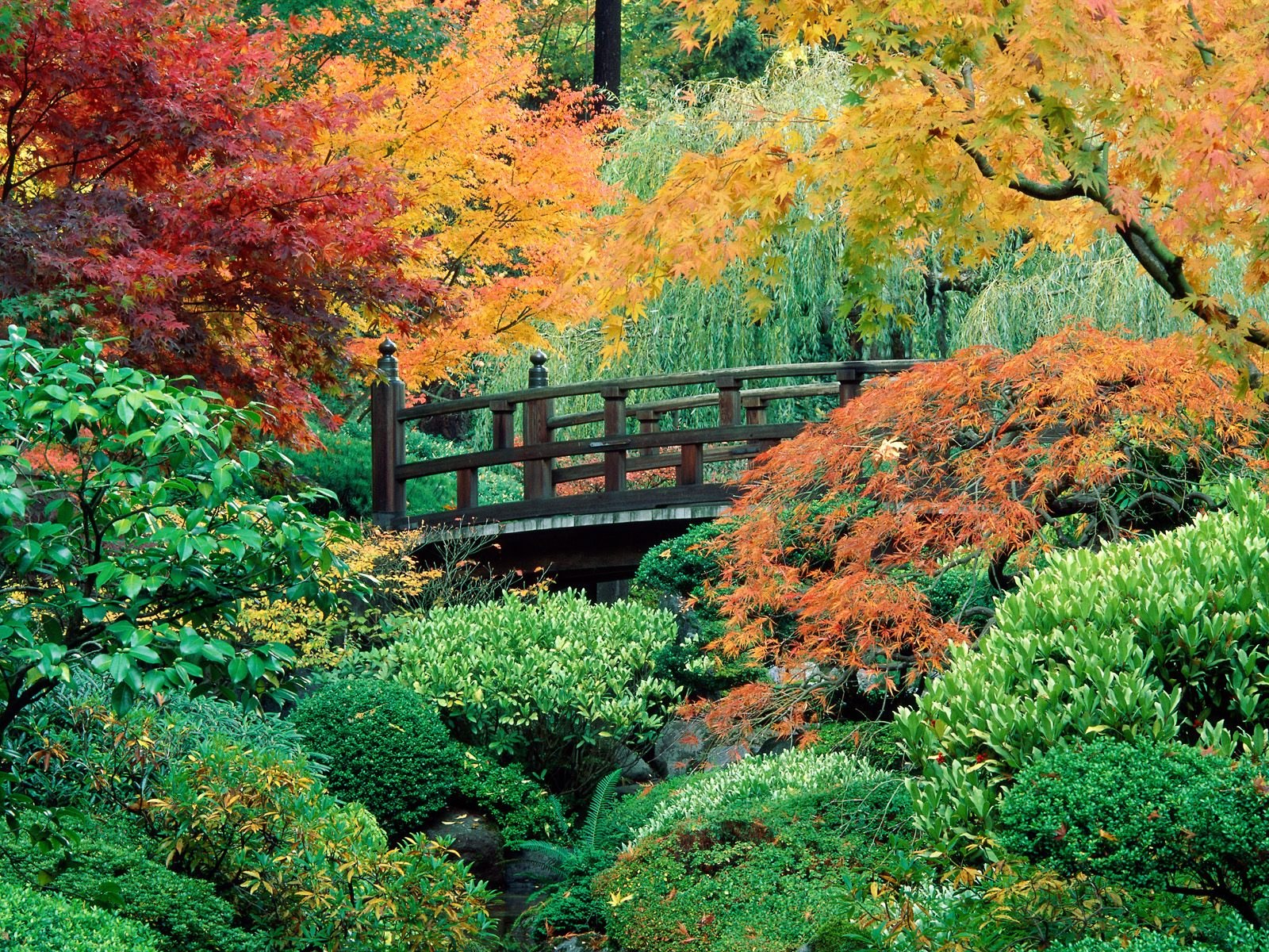 Garden for health rest and restore forces garden for Flowers for japanese gardens