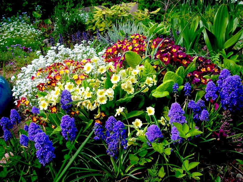Garden plants flowering places of original cultivation for Garden plants
