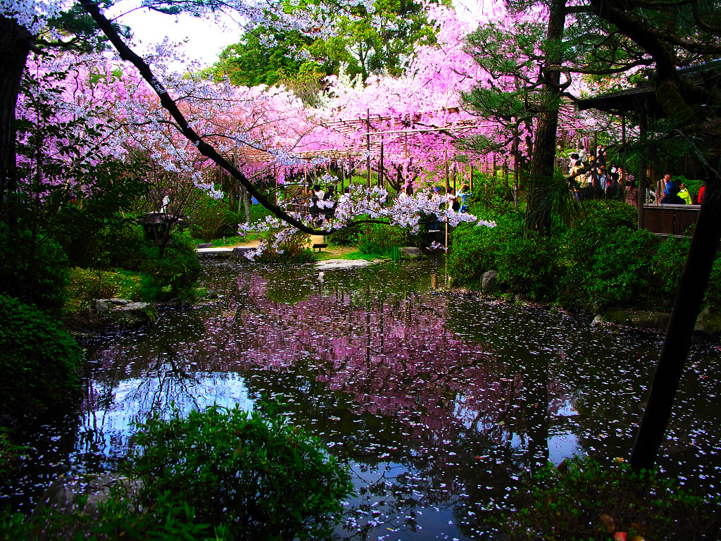 Japanese garden pictures japan garden flowers photo for Japanese zen garden