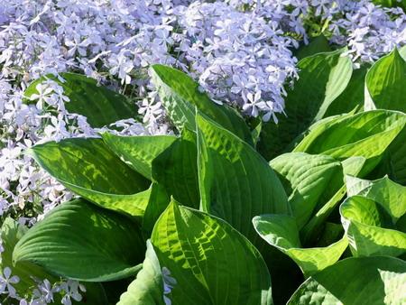 Perennial Plants Perennial Flowers Perennial Plants