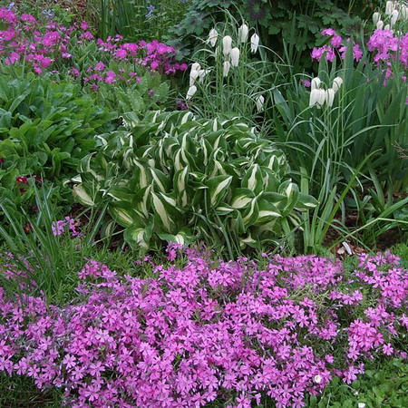 Perennial flowers and plants in your garden flower garden for Perennial garden