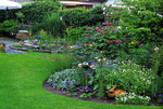 Perennial plant pictures