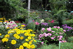 Tips for Your Flower Garden