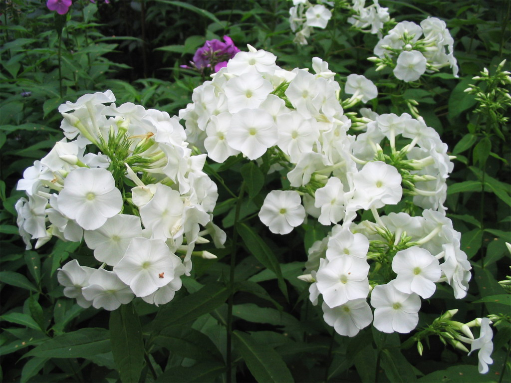 Gardening Tips: Flowers That Grow In Shade