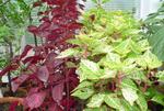 Tips for Your Garden Photos